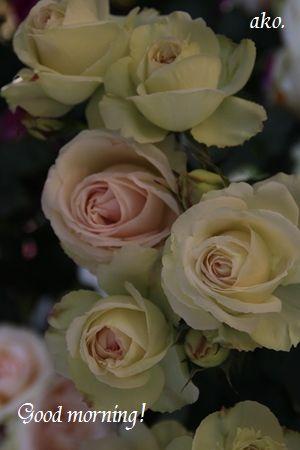 〇バラ・春ひらパーIMG_0426