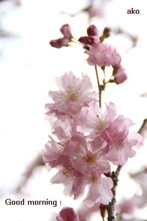 3083桜 IMG_8665
