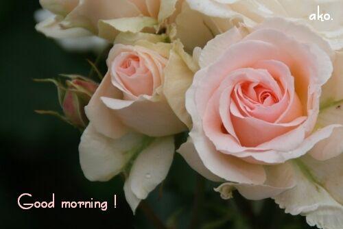 バラ春'11IMG_9146