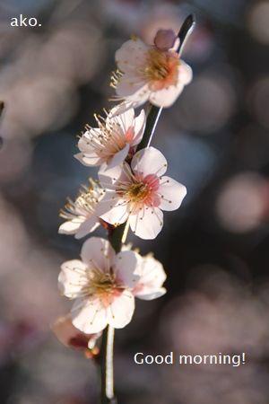 〇2019.2.26 大阪城公園IMG_7009
