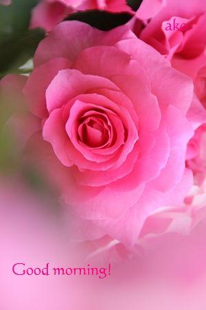 〇バラ・春 うららIMG_9775