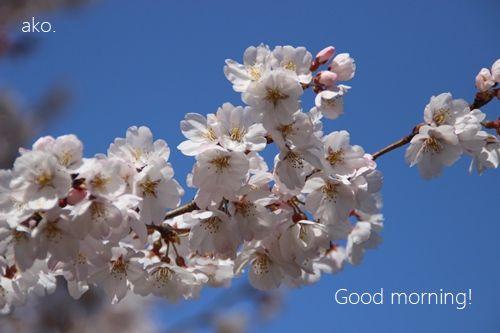 〇桜 '18市大 IMG_4193