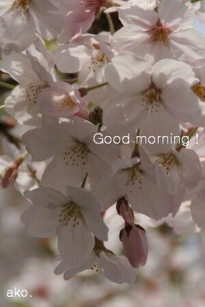 桜IMG_8422