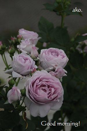 〇バラ春しのぶれどIMG_0229 (15) -