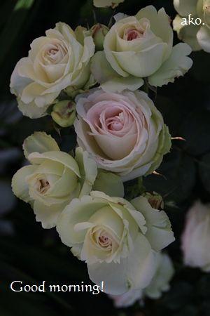 〇バラ・春ひらパーIMG_0424