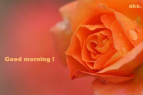 バラ オレンジIMG_2213