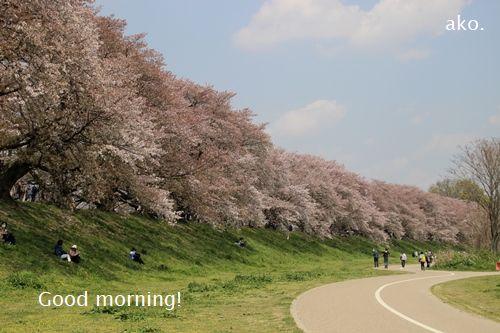 〇桜 '18 八幡 IMG_4461