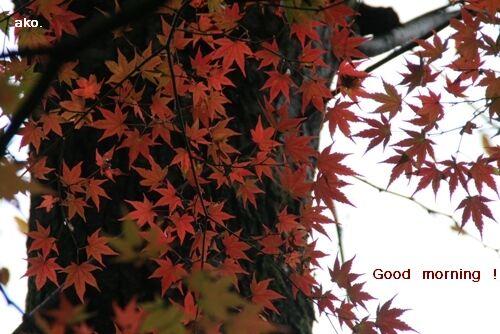 紅葉IMG_4308
