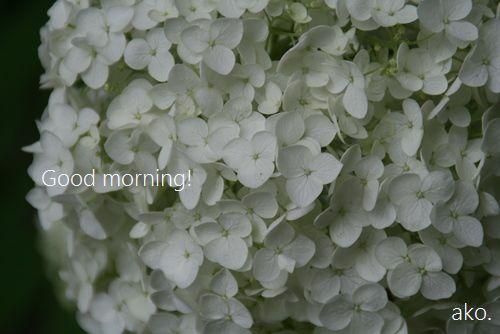 〇あじさいIMG_0744 -