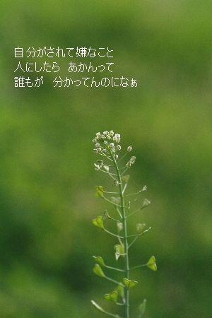 Img_0771