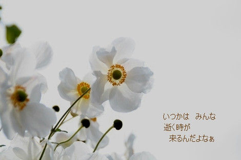 Img_0942