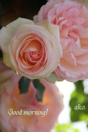 〇バラ春・ひらパー_0666