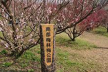 220px-Minabe-Bairin_Minabe_Wakayama13n4272