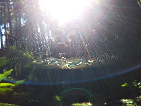 クモの巣コラボ