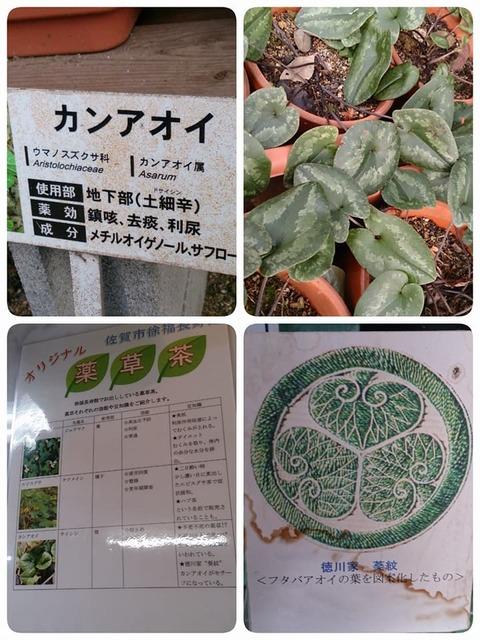 徐福薬草園