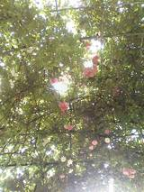 薔薇のアーチ