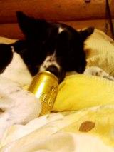 ビール中のあび
