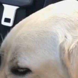 イヌが車の中で寝ていた。この休日は大好きな家族と一緒に過ごした→帰りの車でこうなった…