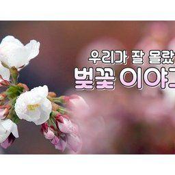 【聨合ニュース】 歴史の中の桜、韓日110年の王桜の起源論争に終止符…私たちがよく知らなかった桜の話[03/17]