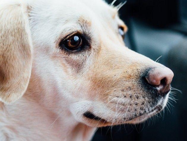 ネアンデルタール人はイヌの価値気づかず絶滅?イヌ家畜化はいつ始まったか