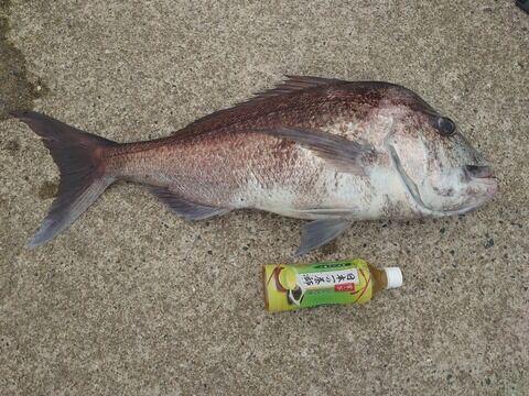 【画像】ショアからやべーの釣れた