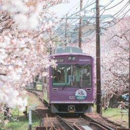 韓国人「日本の京都に桜を見に行ってきた」→「天国に他ならないね」