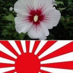 【韓国】 「ムクゲは日の丸を象徴する日本の花」主張に日本ネチズンが熱い反応、「一本残らず引っこ抜けよ!」[03/23]