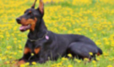 【獣姦】飼い犬にバイアグラを与えてみた結果・・・・・・・・・・・・・