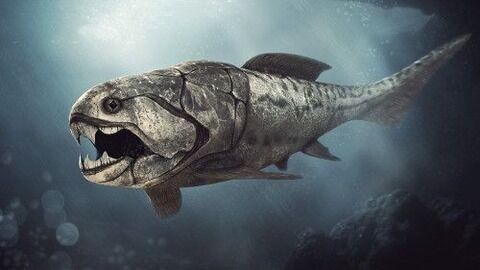 【画像】3億年前の海を支配していた魚怖すぎて草wwwwwwwwwwwww