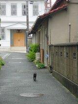 酒蔵通りの猫
