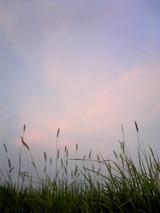 夕焼けと風