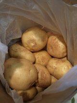 安芸津のジャガイモ