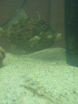 瀬戸内海に住む魚たち