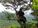三草山-松の木の男性
