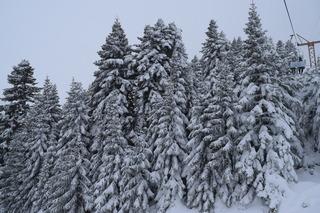 もみの木の樹氷