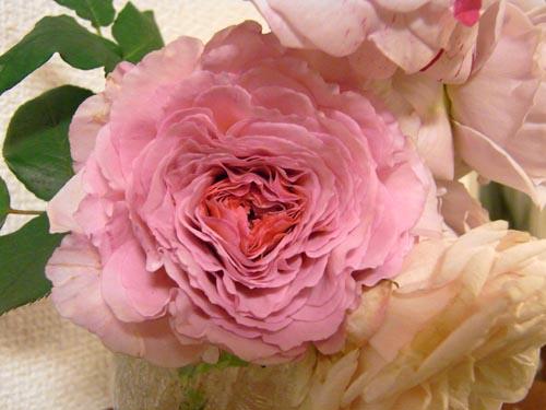 rose606