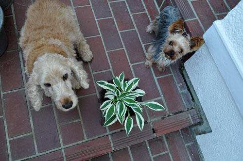 dogs524_ms