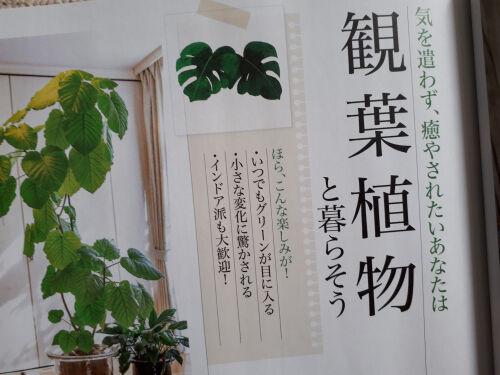 green321ms