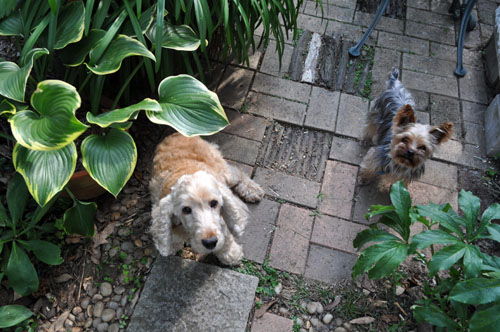 Dogs620_ms