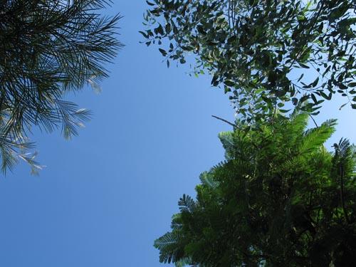 trees814