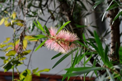 pinkbottle1014b (500x331)