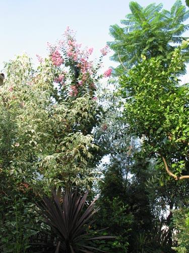 garden821a