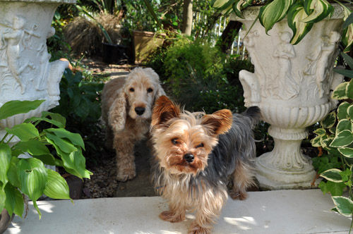 dogs622_ms