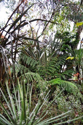 jungle1021a_ms