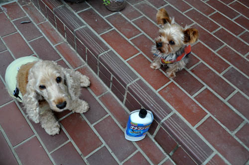 dogs521_ms