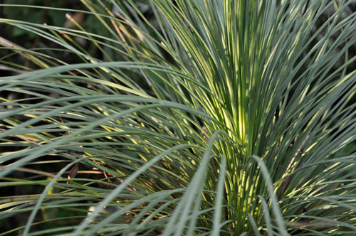 grasstree522_ms
