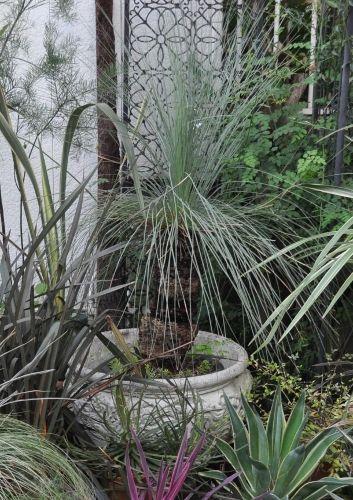 grasstree1020 (353x500)