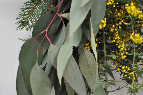 eucalyptus227_ms