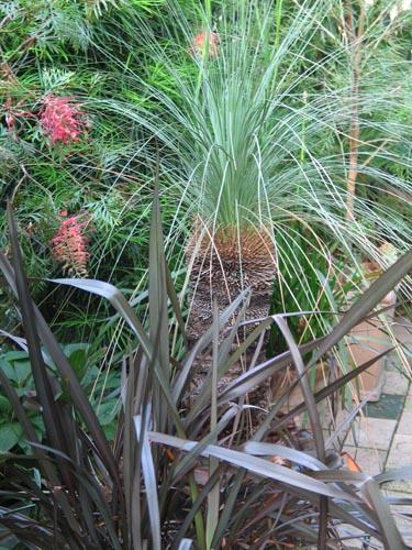 grasstree602
