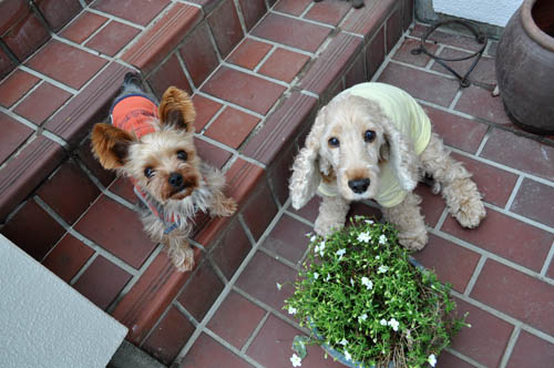 dogs518_ms
